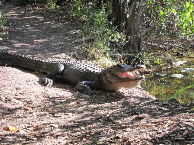 Shark Valley Bike Trail Everglades National Park